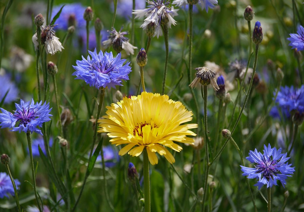 Andere bloem